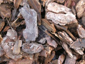 3 pine ornamental bark